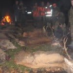 polowanie 10-12.11. 2011 023